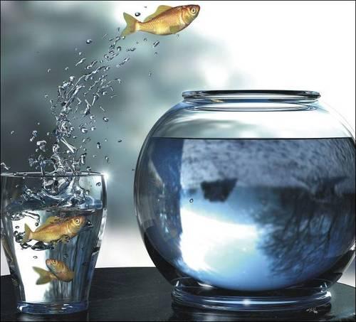comfort-zone-fish4