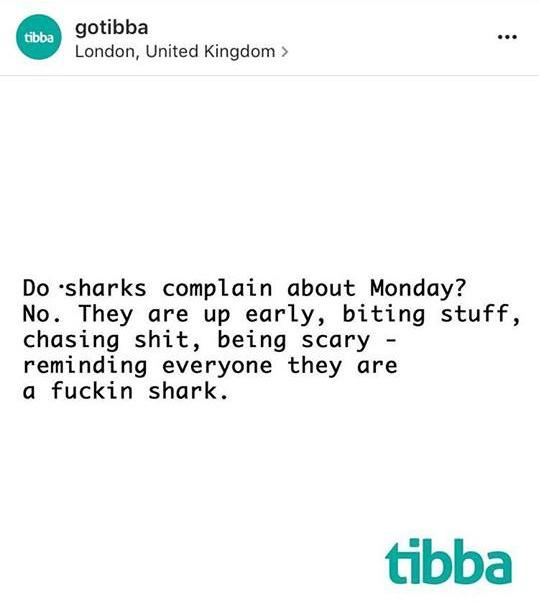 Stěžují si žraloci na pondělí nebo moře práce? Ne. Jsou vzhůru za svítání